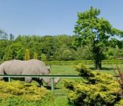 Wybieg nosorożca