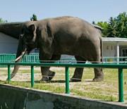 Wybieg słonia
