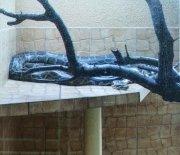 Akwarium - pyton tygrusi