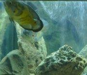 Akwarium - ryby egzotyczne