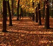 Cygański Las w Bielsku-Białej