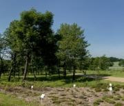 Kolekcja krzewów liściastych umiarkowanego klimatu
